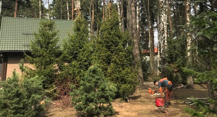 Очистка участка от деревьев и кустарников: когда, зачем, как